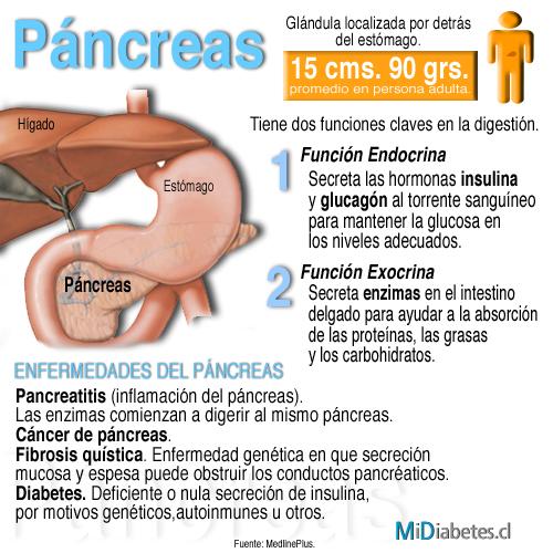 pancreas - Federación Mexicana de Diabetes