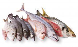 pescato mediterraneo in fondo bianco