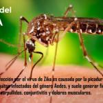 ¿Qué es el virus del Zika?