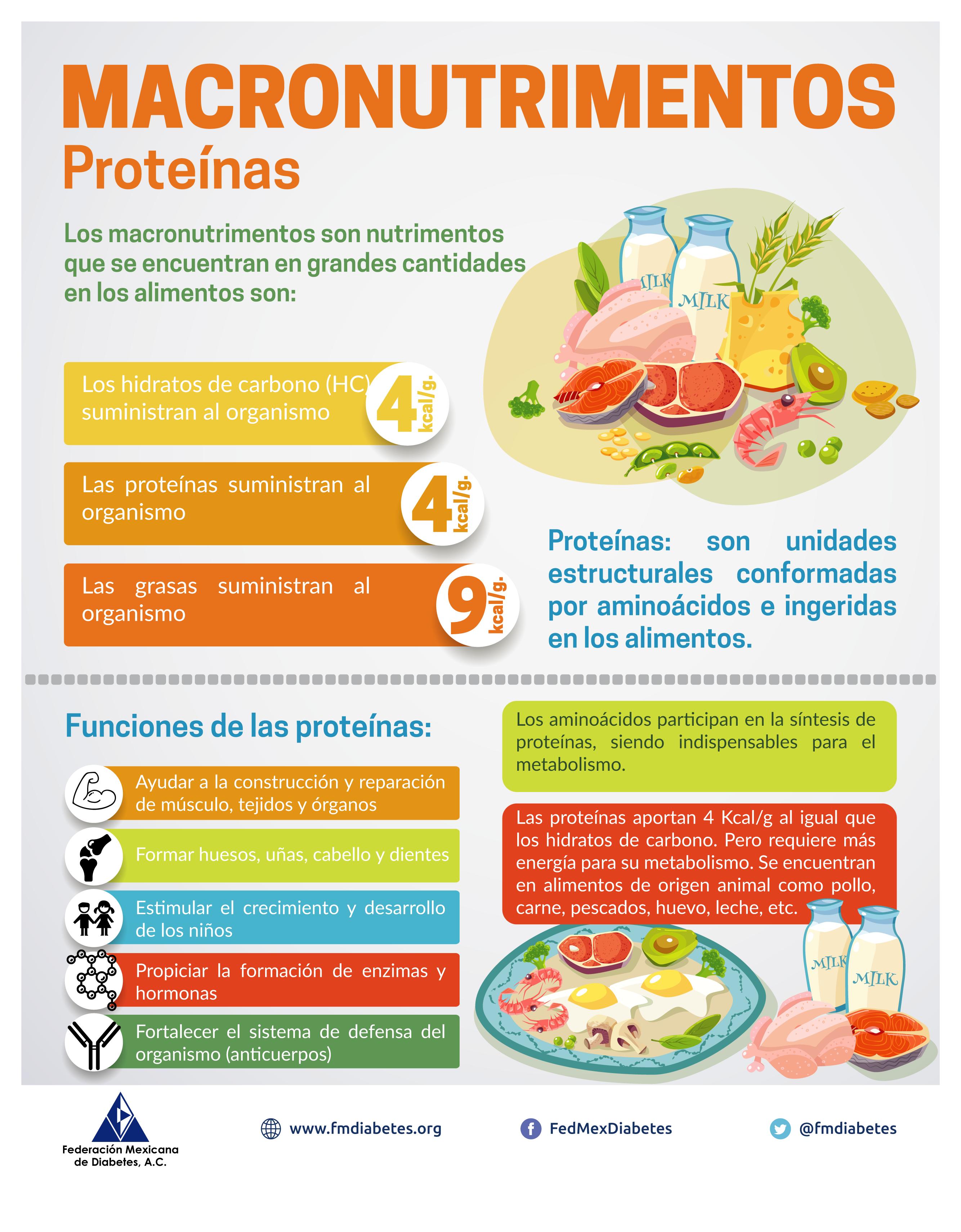 Macronutrimentos – Proteínas