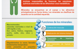 Micronutrimentos – Minerales