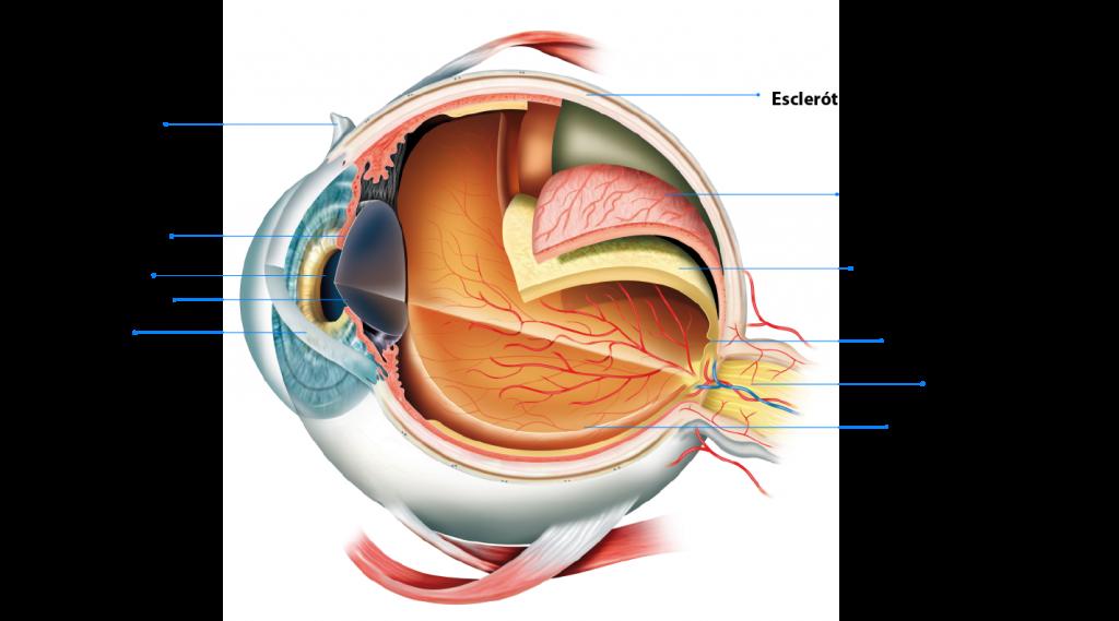 Alertan sobre el edema macular diabético, una de las principales causas de ceguera en México