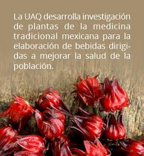 Plantas tradicionales mexicanas que benefician a la salud