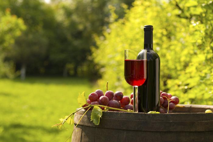 El vino tinto podría disminuir el riesgo cardio metabólico