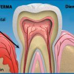 Cuida tus encías y controla tu diabetes